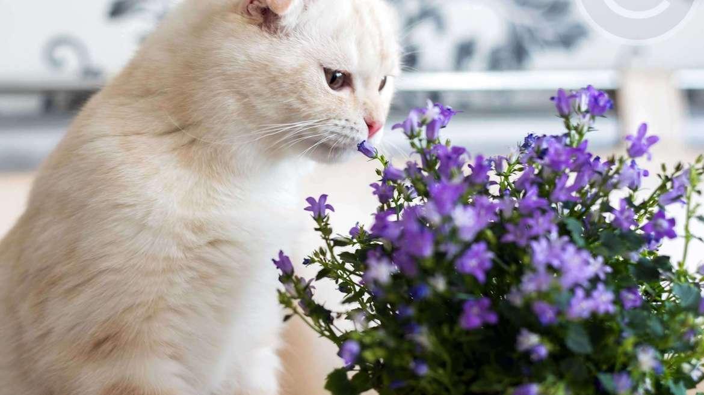 Indoor Plants Safe For Cats Fox Farm Bromeliads