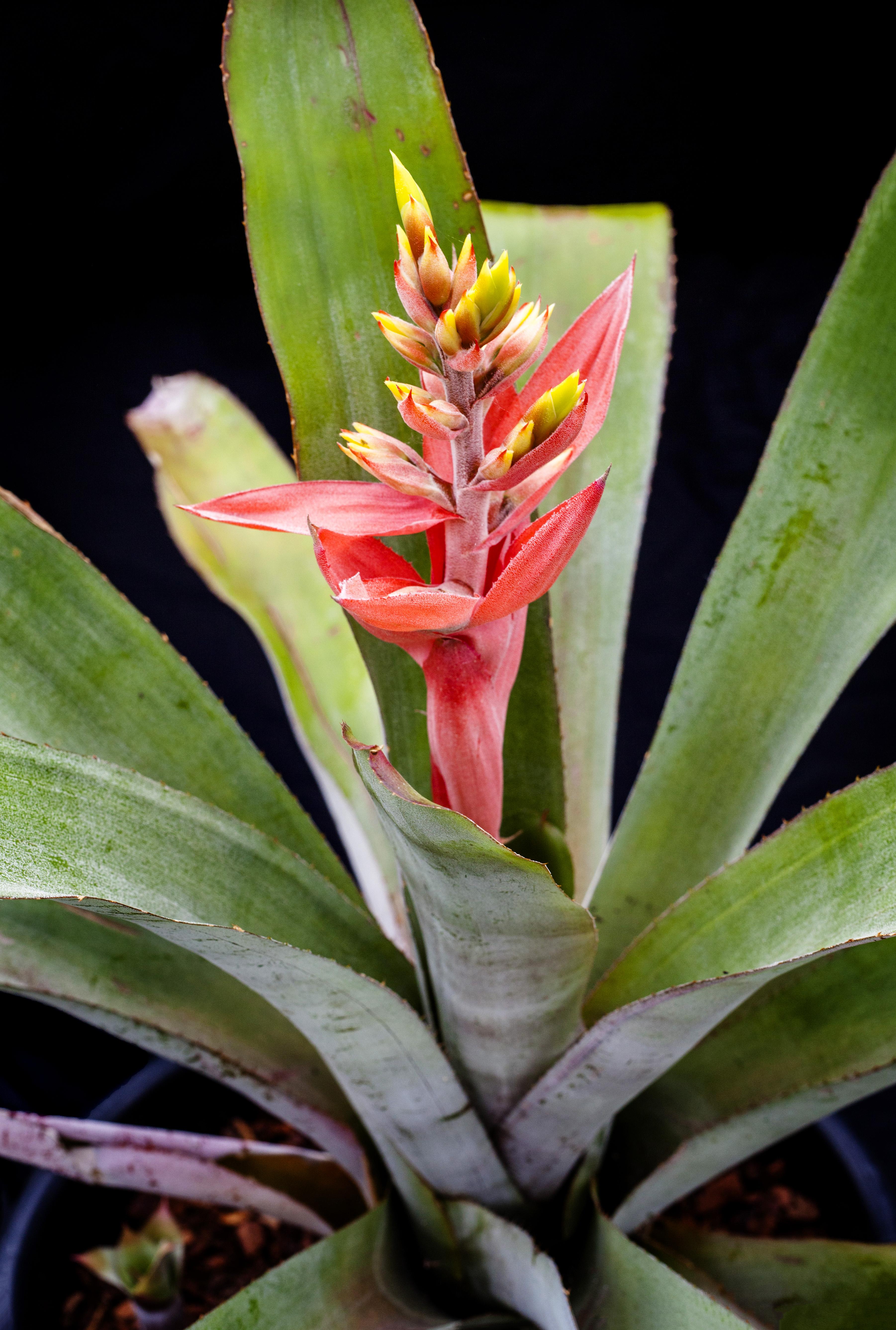 Bromeliads_101.jpg