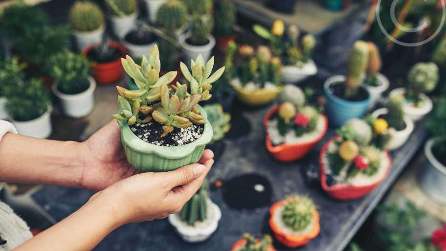 Miniature stands and trays for outdoor plants